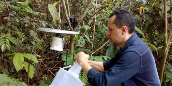Nova espécie de inseto ligada à leishmaniose é descoberta no Pará