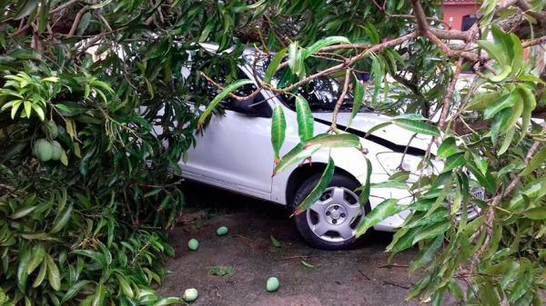Quando o seguro protege o carro contra queda de árvores?