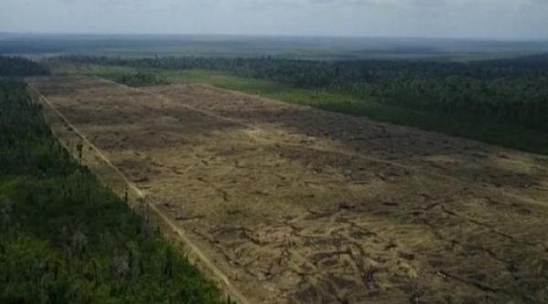 Desmatamento no Pará aumentou quatro vezes nos últimos 12 meses, diz instituto