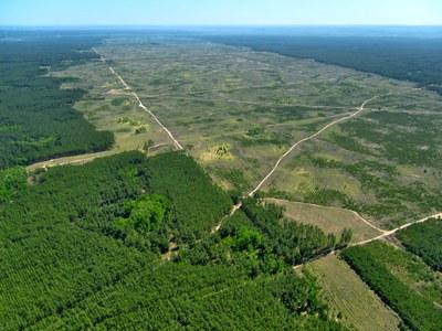 Tribunal condena fazendeiro por derrubar área de floresta do tamanho de 2.600 campos de futebol na Terra do Meio