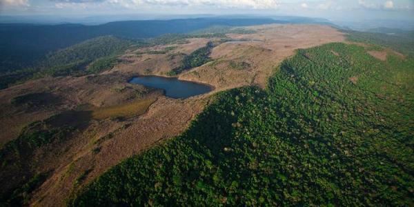 PF cumpre mandados de prisão em operação contra exploração ilegal de madeira na Amazônia