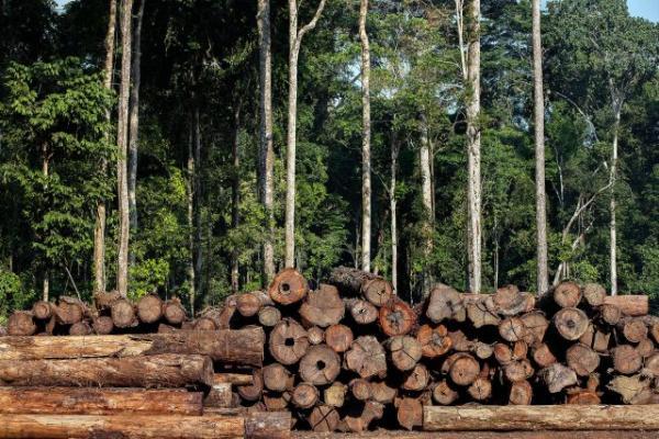 Acusados de crimes na comercialização de madeira são condenados a mais de 40 anos