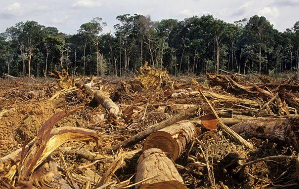 Política de desmatamento de Bolsonaro faz Alemanha suspender R$ 155 mi à Amazônia