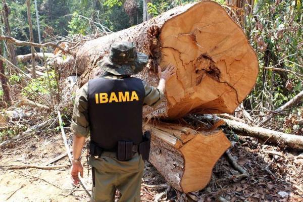 Ibama acusa Exército de negar apoio na destruição de maquinário de garimpo ilegal na Amazônia - Crédito: Felipe Werneck / Ibama