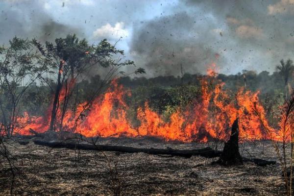Pesquisa: católicos discordam de Bolsonaro sobre Amazônia