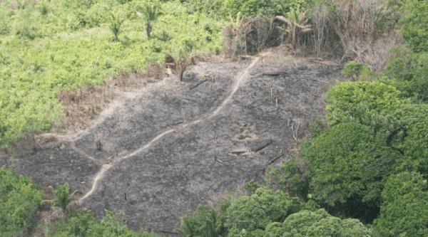 MPF aponta que Segup e PM se recusaram a apoiar o Ibama contra o desmatamento