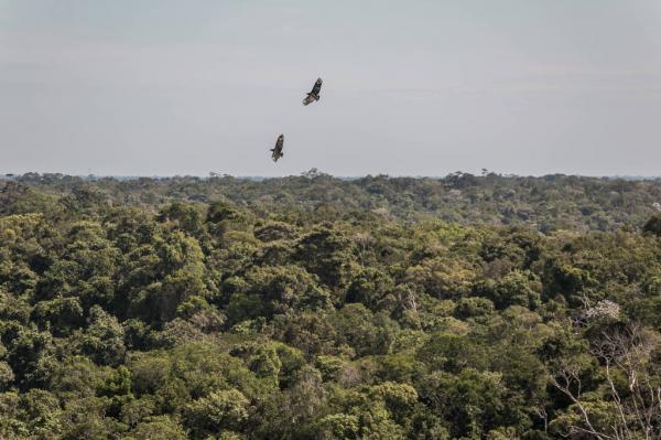 Abismo climático na Amazônia se aproxima, dizem cientistas