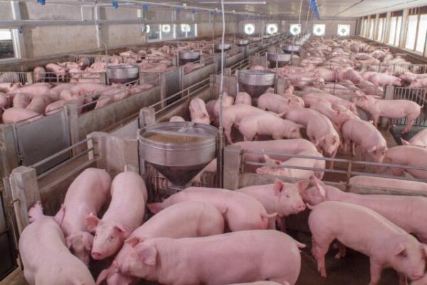 Representantes da Argentina visitaram unidades da Embrapa nesta semana. Foto: Ministério da Agricultura