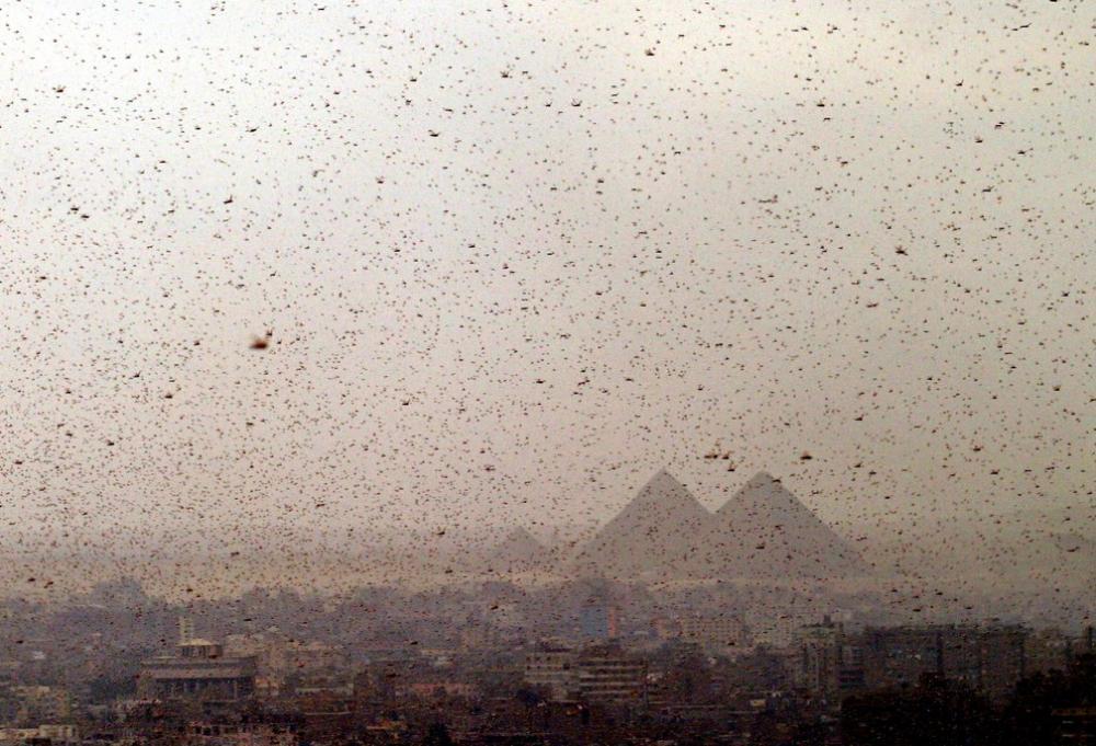 Foto de novembro de 2004 mostra nuvem de gafanhotos perto das Pirâmides de Gizé, no Egito — Foto: Reuters