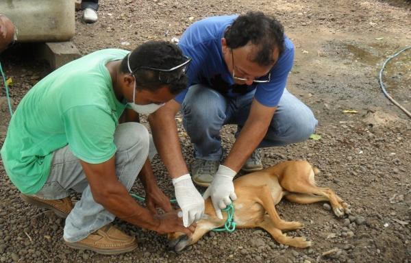 Canaã e Parauapebas já sacrificaram quase 1000 cães, vítimas do mosquito palha