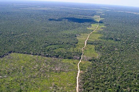 Produção de carne afeta desmatamento na Amazônia